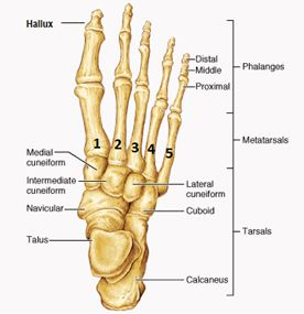Foot Stress Fracture With Follow Up Virtual Fracture Clinic